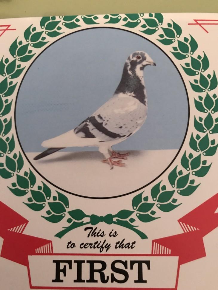 Pigeon Sale