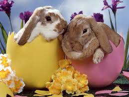 Easter & St Georges Weekend