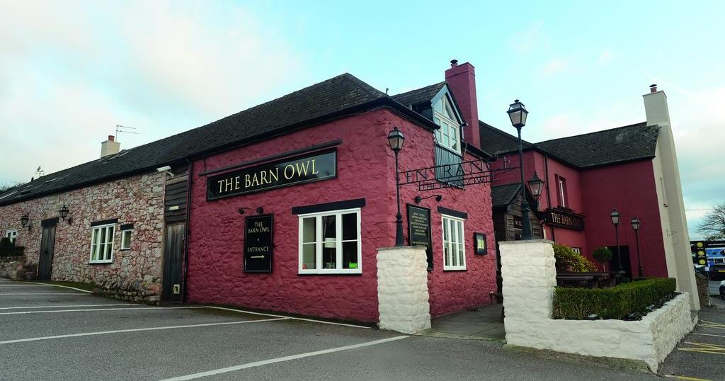 Barn Owl, Kingskerswell