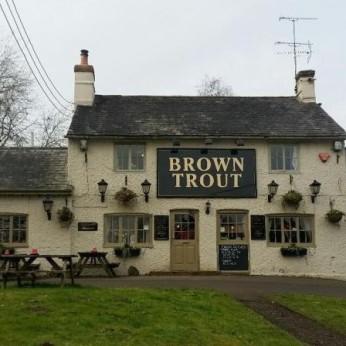 Brown Trout, Lamberhurst