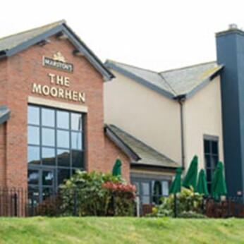 Moorhen, Peterborough