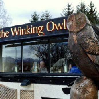 Winking Owl, Aviemore