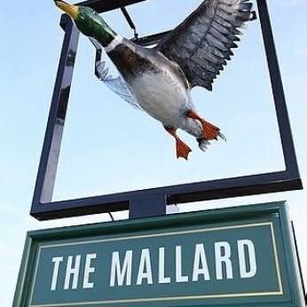 Mallard, Deneside