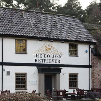 Golden Retriever, Bracknell