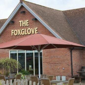 Foxglove, Forest Town